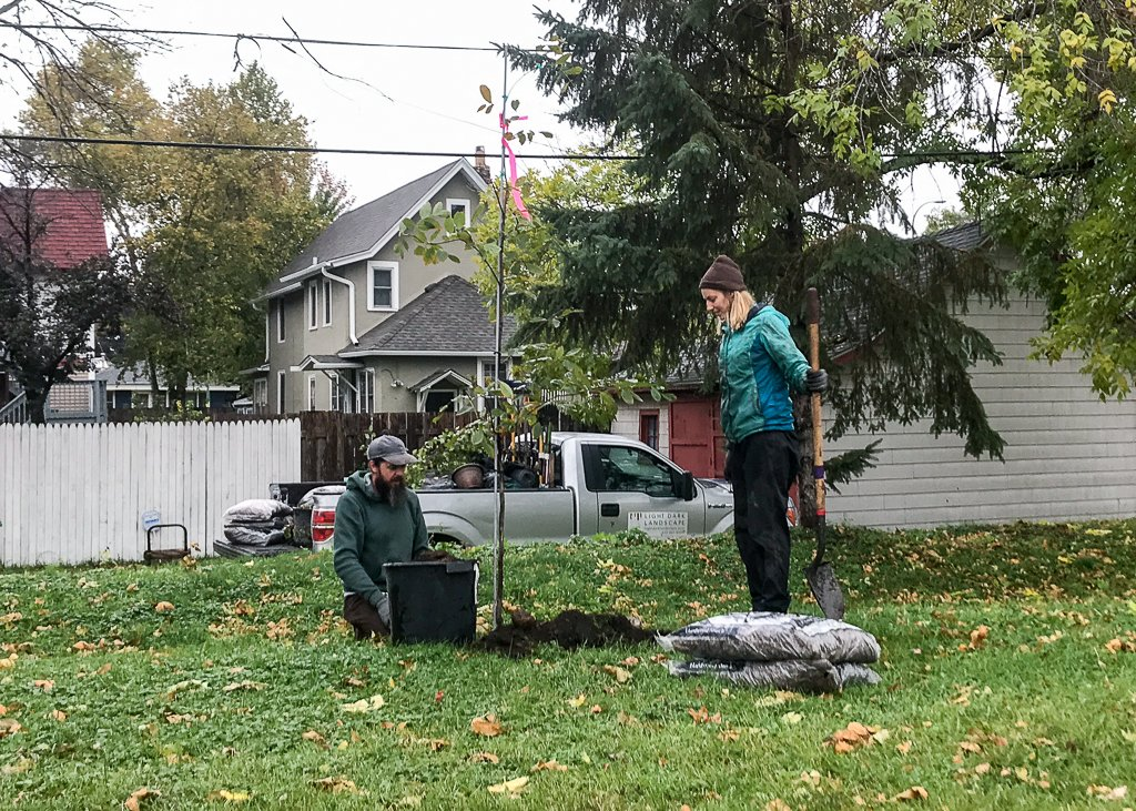 Two people plant a tree in a yard