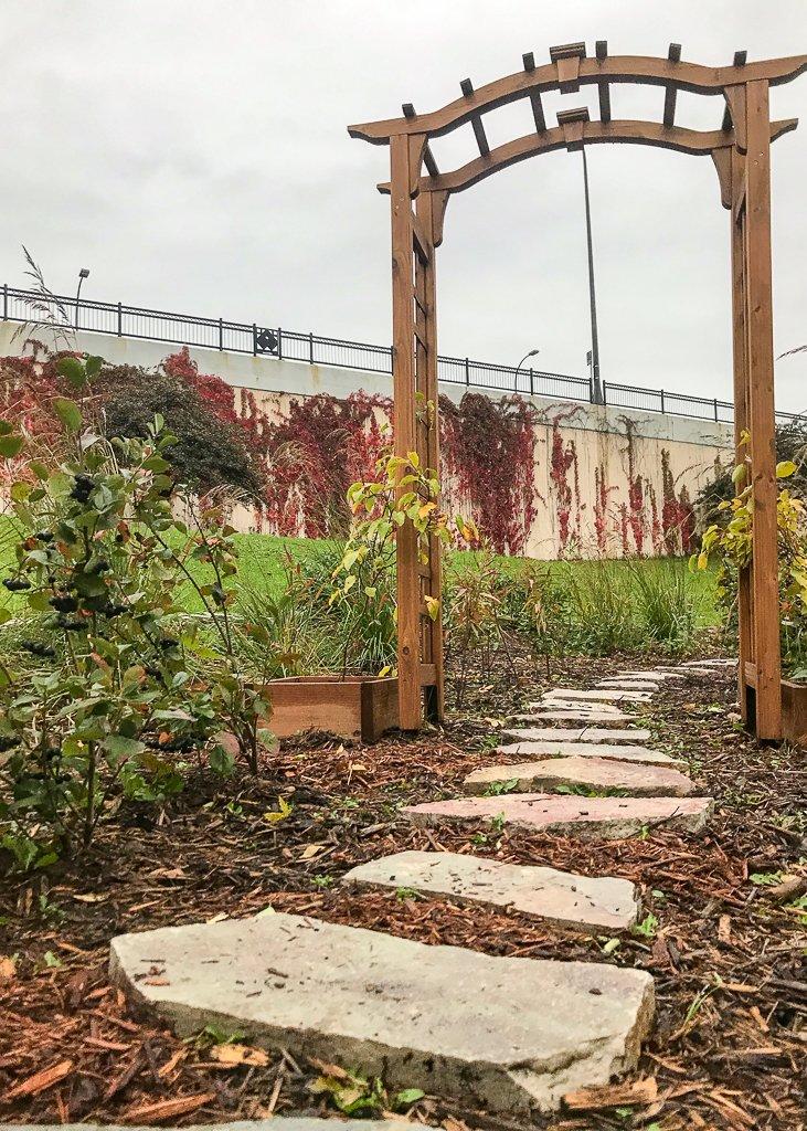A path and pergola in a garden