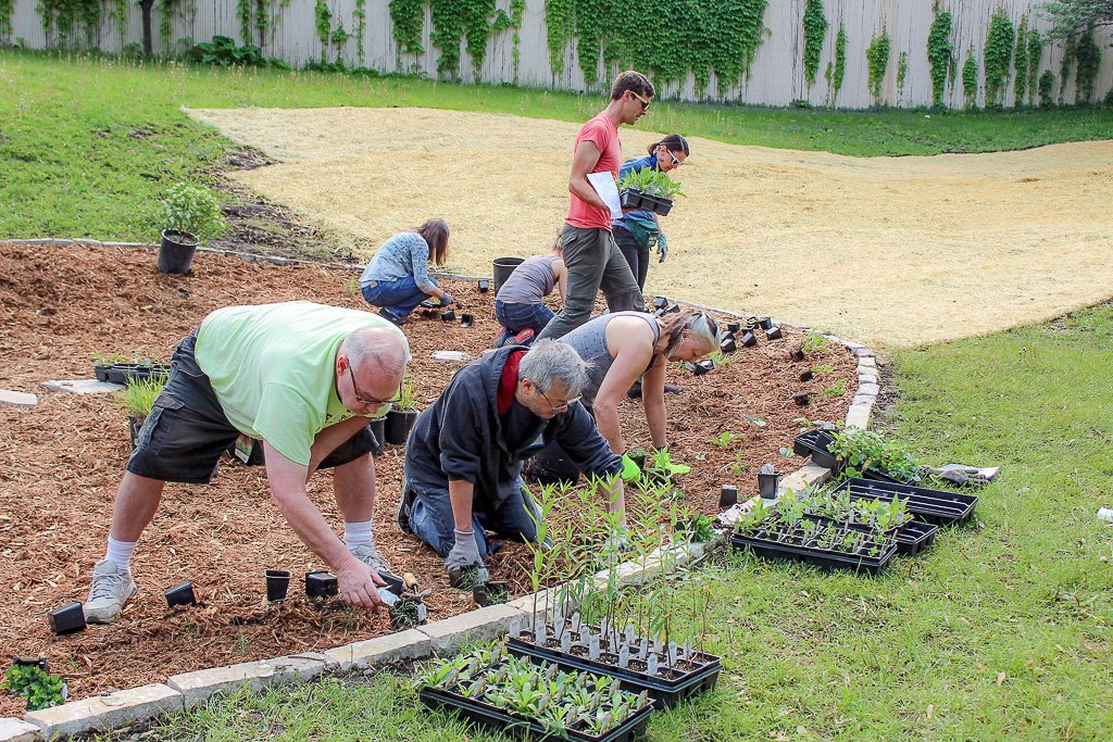 People plant seedlings in a bed of mulch